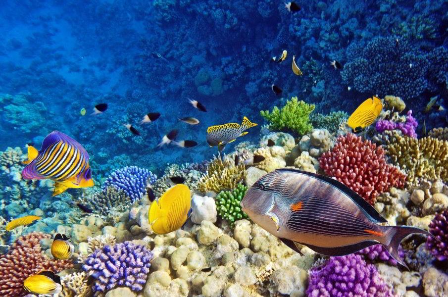 Viajar a barcelona aqu rium de barcelona for Aquarium de barcelona