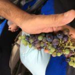 Grupo pequeño de cava y cata de vinos de 4WD desde Barcelona